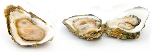 Gillardeau Austern Kaufen